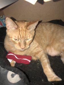 Cat subscription box, feline, cat toys, cat treats, cat health, cat love