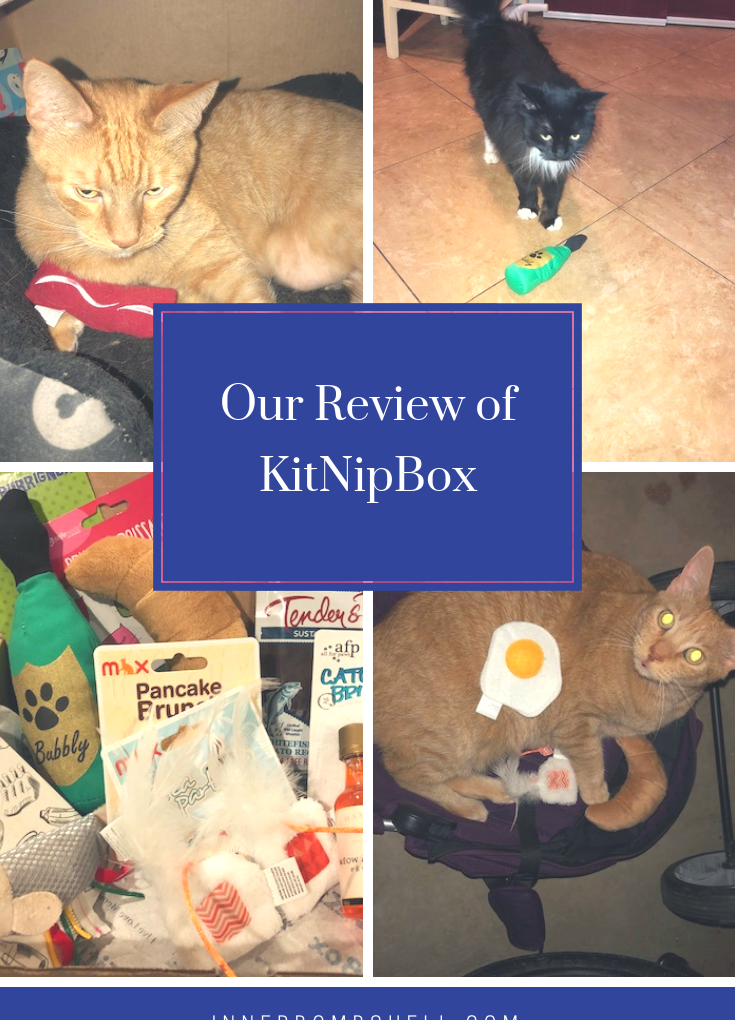Give Your Cat A Monthly Treat With The KitNipBox.